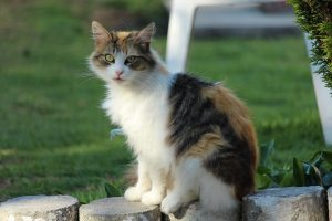 securiser-jardin-chat-3